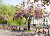 Cherry blossoms and bikes — Stock Photo