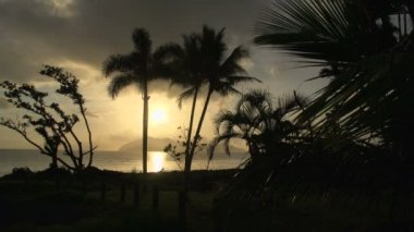 Sunrise with palm trees and Dunk Island — Stock Video