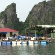 Sailing through floating fishing village in Ha Long Bay — Stock Video