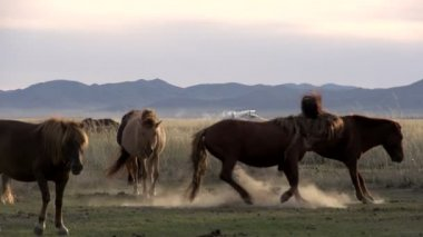 Horse chases another horse away — Stock Video