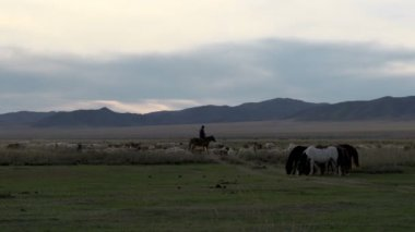 Nomad riding a horse between the cattle — Stock Video