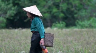 Elderly lady walking at the farm land — Stock Video #45849181