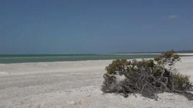 Shell Beach in the Shark Bay National Park — Stock Video