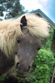 Close-up horse head staring in camera — Stock Photo