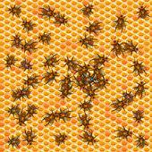 Honeycomb — Stock vektor
