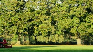 Lawnmower in park — Wideo stockowe