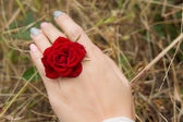 Flowers ring — Stock Photo