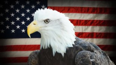 Bald Eagle American Flag — Stock Video