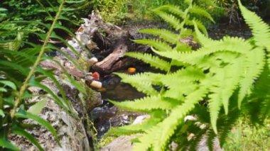 Fallen log over appalachian mountain stream — Stock Video