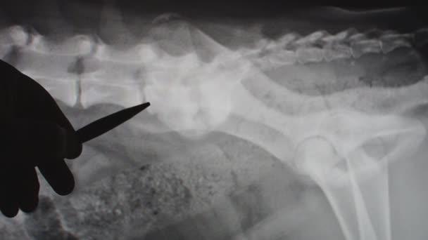Veterinario explicando la radiografía a un propietario del animal doméstico — Vídeo de stock