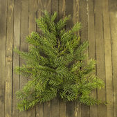 New year background with conifer — Stock Photo