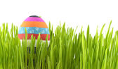 Striped Easter egg in grass — Stock Photo