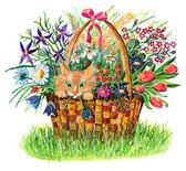 Panier chat drôle et fleurs — Photo
