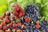 Kamperfoelie en aardbeien — Stockfoto