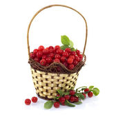 Wicker basket with red cherry — Foto Stock