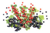 Cherry and black currant branches — Foto Stock