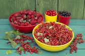 Summer gather of berries — Stockfoto