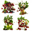 Set with summer flowers and berries — Stock Photo