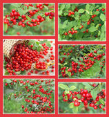 Set with red currant — Stock Photo