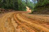 Rain Forest With A Dirt Road — Stock Photo