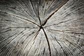 Old tree stump texture background — Stock Photo