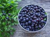 Ripe blueberries — Foto de Stock