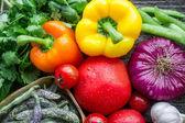 Frisches gemüse aus dem garten — Stockfoto
