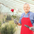 Gardener holding rose — Stock Photo #45853957