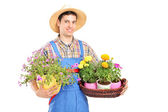 Male gardener with holding flower — Stock Photo
