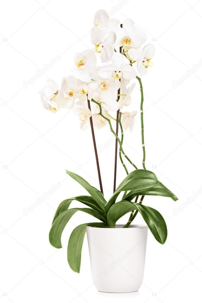 Необычные цветы в москве купить