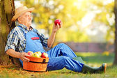Agricultural worker with basket apples — Stock Photo