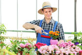 Male gardener pruning flowers — Stock Photo