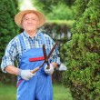 Man trimming fence in garden — Stock Photo #45883899