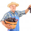 Vintner holding basket of wine grapes — Stock Photo #45885743