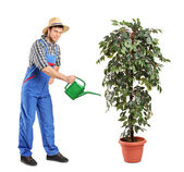 Person watering decoration plant — Stock Photo