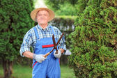 Man trimming fence in garden — Stock Photo