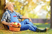 Male worker with basket of apples — Stock Photo