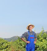 Vintner posing with vineyard — Stock Photo