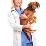 Female veterinarian holding puppy — Stock Photo #45891091