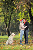 Boyfriend and girlfriend kissing and dog watching — Stock Photo