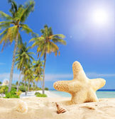 Starfish on tropical beach — Stock Photo