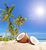 Sliced coconut on tropical beach — Stock Photo