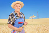 Agricultural worker holding wheat straws — Stock Photo
