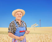 Mature farmer holding wheat straws — Stock Photo