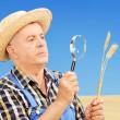 Farmer examining his harvested wheat — Stock Photo #51575059