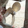 Rusty propeller in an old fishing boat  — Stock Photo #46776445