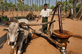 Oil production in Bagan Myanmar — Stock Photo