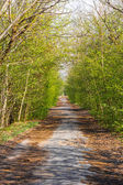 Country road with trees along — Stock Photo