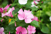 Floral Pink Flowers — Stockfoto