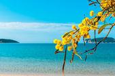 Mimosas sea beach sardinia yellow — Stock Photo